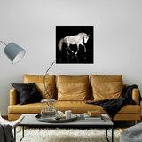Dibond art - White horse_