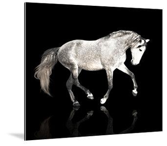 Dibond art - White horse