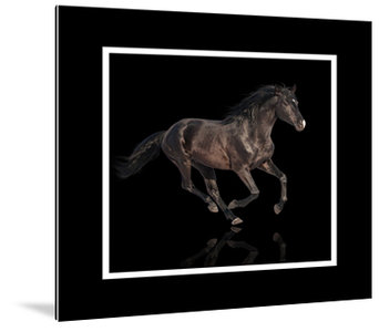 Dibond art - Brown horse in framework