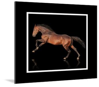 Dibond art - Brown horse