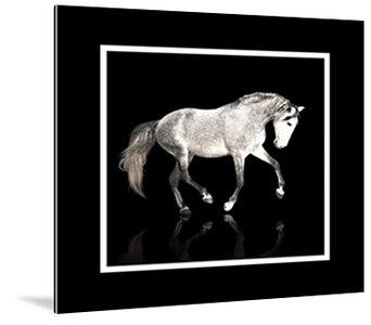 Dibond art - White horse in framework
